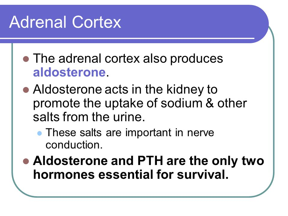 Adrenal Cortex The adrenal cortex also produces aldosterone. Aldosterone acts in the kidney to promote the uptake of sodium & other salts from the uri