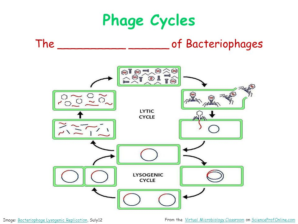 ____________________ Transfer of DNA from one cell to another via a replicating virus (bacteriophage).DNA Can occur between prokaryotic cells or between eukaryotic cells.
