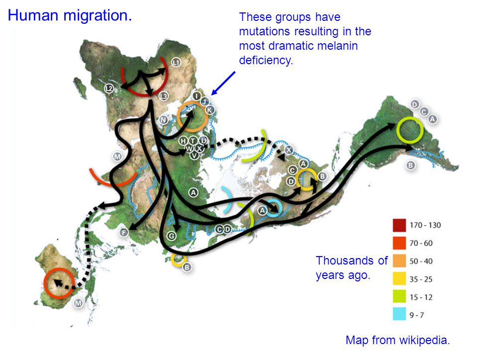 Thousands of years ago. Human migration. Map from wikipedia.