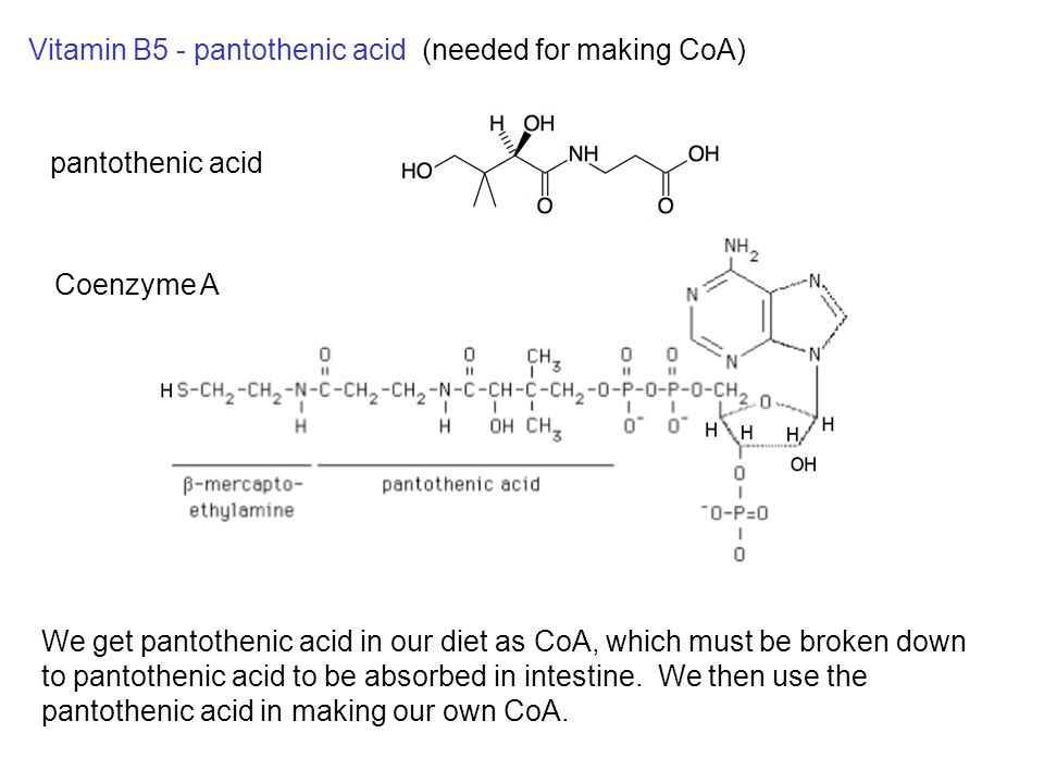 Vitamin B5 - pantothenic acid (needed for making CoA) We get pantothenic acid in our diet as CoA, which must be broken down to pantothenic acid to be absorbed in intestine.