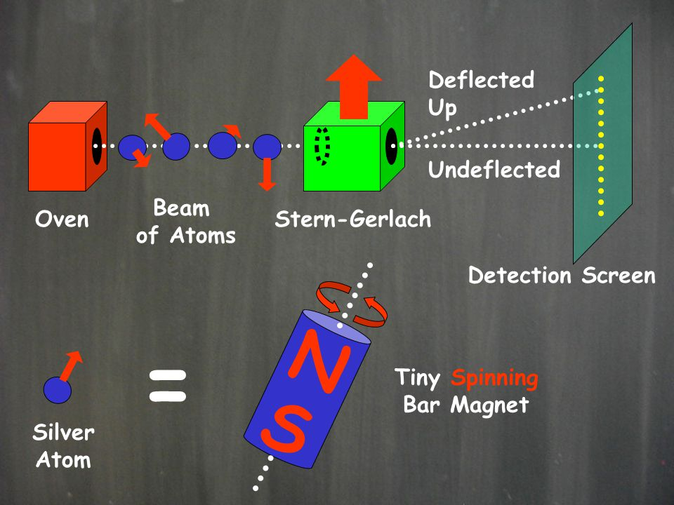 Deflected Up Undeflected Oven Beam of Atoms Stern-Gerlach Detection Screen Silver Atom = Tiny Spinning Bar Magnet N S