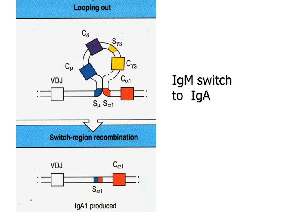 IgM switch to IgA