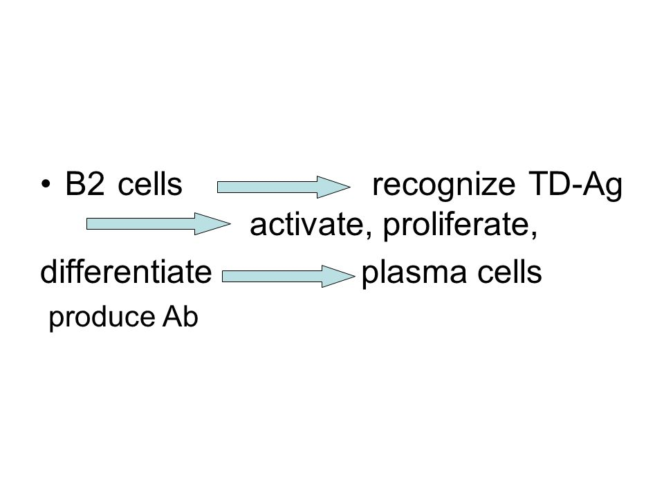 (2) B cells proliferate and differentiate ------help of Th Activated B cells express receptors of cytokines(IL-4R, IL-5R, IL-6R ) Activated Th2 secrete cytokines IL-4, IL-5,IL-6 to enhance proliferation and differentiation of B cells B cells differentiate into plasma cells ( antibody forming cells)---- produce Ab, some activated B cells become memory B cells