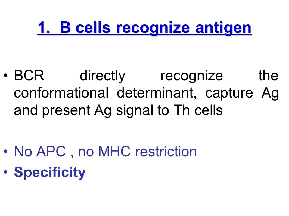 Part II Rules of humoral immunity 1. Primary response 2. Secondary response