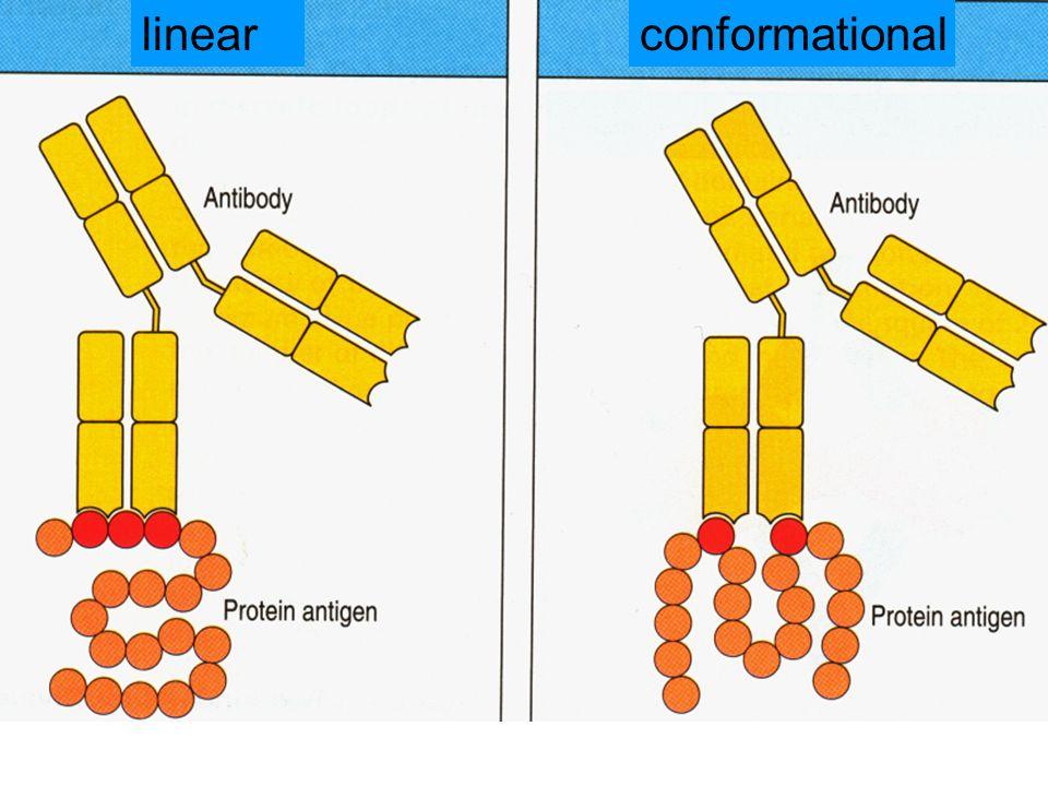 conformationallinear