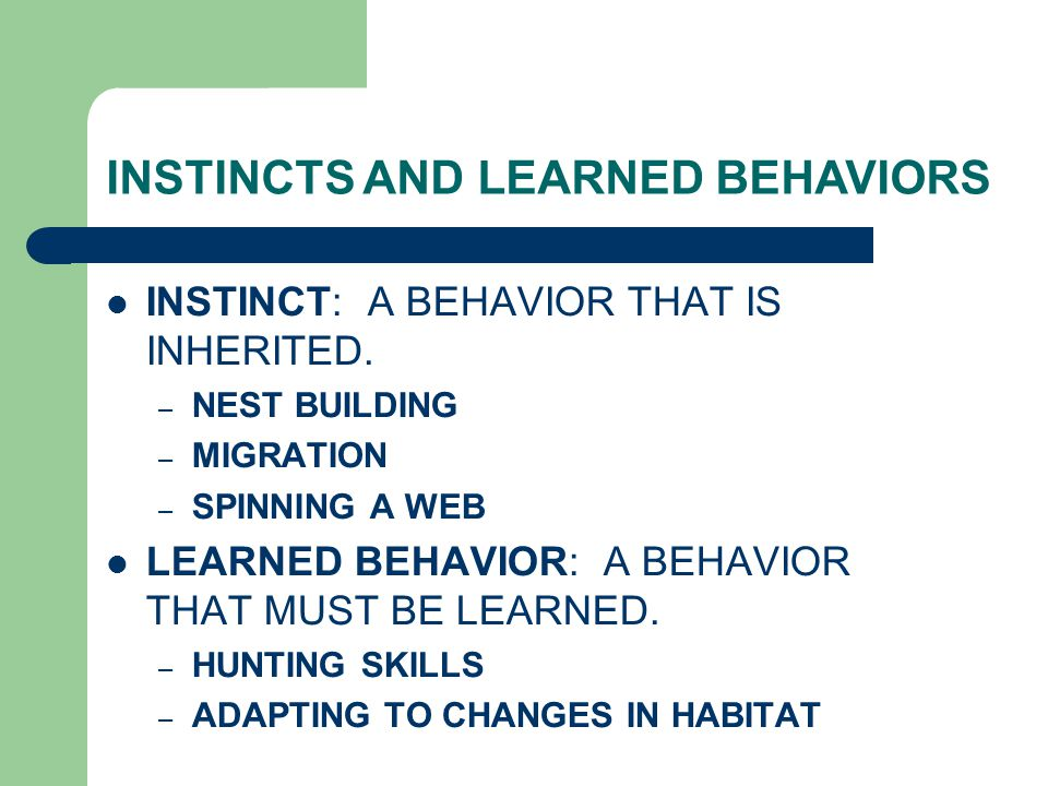 INSTINCTS AND LEARNED BEHAVIORS INSTINCT: A BEHAVIOR THAT IS INHERITED. – NEST BUILDING – MIGRATION – SPINNING A WEB LEARNED BEHAVIOR: A BEHAVIOR THAT