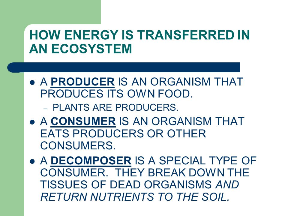 HOW ENERGY IS TRANSFERRED IN AN ECOSYSTEM A PRODUCER IS AN ORGANISM THAT PRODUCES ITS OWN FOOD. – PLANTS ARE PRODUCERS. A CONSUMER IS AN ORGANISM THAT