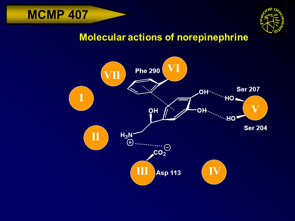 MCMP 407 Molecular actions of norepinephrine I II IIIIV V VI VII Asp 113 Ser 204 Ser 207 Phe 290