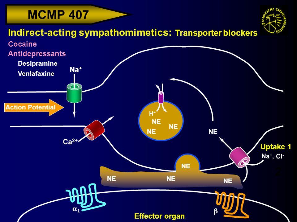 MCMP 407 Action Potential Na + Indirect-acting sympathomimetics: Transporter blockers Cocaine Antidepressants H+H+ Effector organ Ca 2+ NE Uptake 1 Na