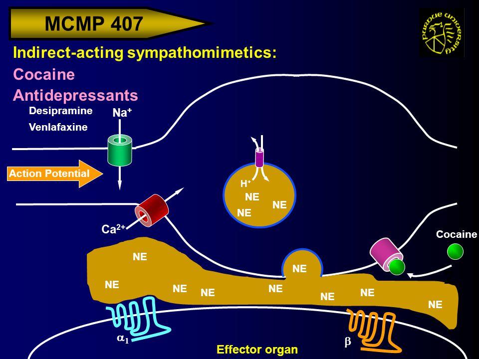 MCMP 407 Action Potential Na + Indirect-acting sympathomimetics: Cocaine Antidepressants H+H+ Effector organ Ca 2+ NE   2 Desipramine Venlafaxine