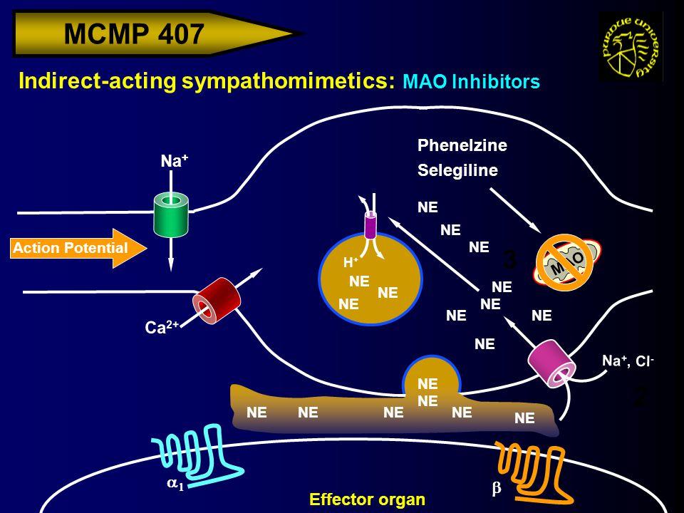 MCMP 407 Action Potential Na + Indirect-acting sympathomimetics: MAO Inhibitors H+H+ Effector organ Ca 2+ NE Na +, Cl - NE   MAO 2 3 Phenelzine S