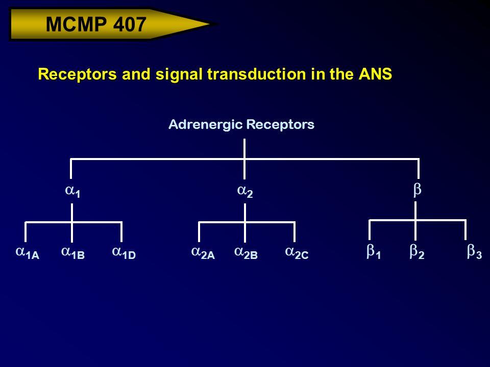 MCMP 407 Receptors and signal transduction in the ANS Adrenergic Receptors  1A 11 22  1B  1D  2A  2B  2C 11 22 33
