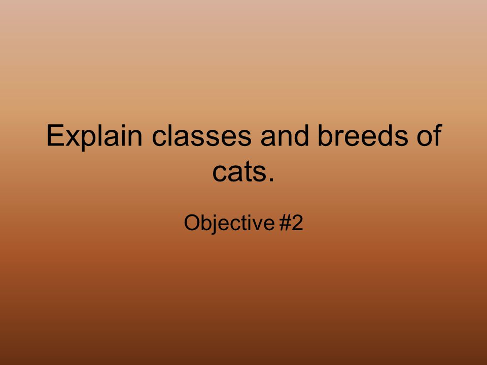 Explain classes and breeds of cats. Objective #2