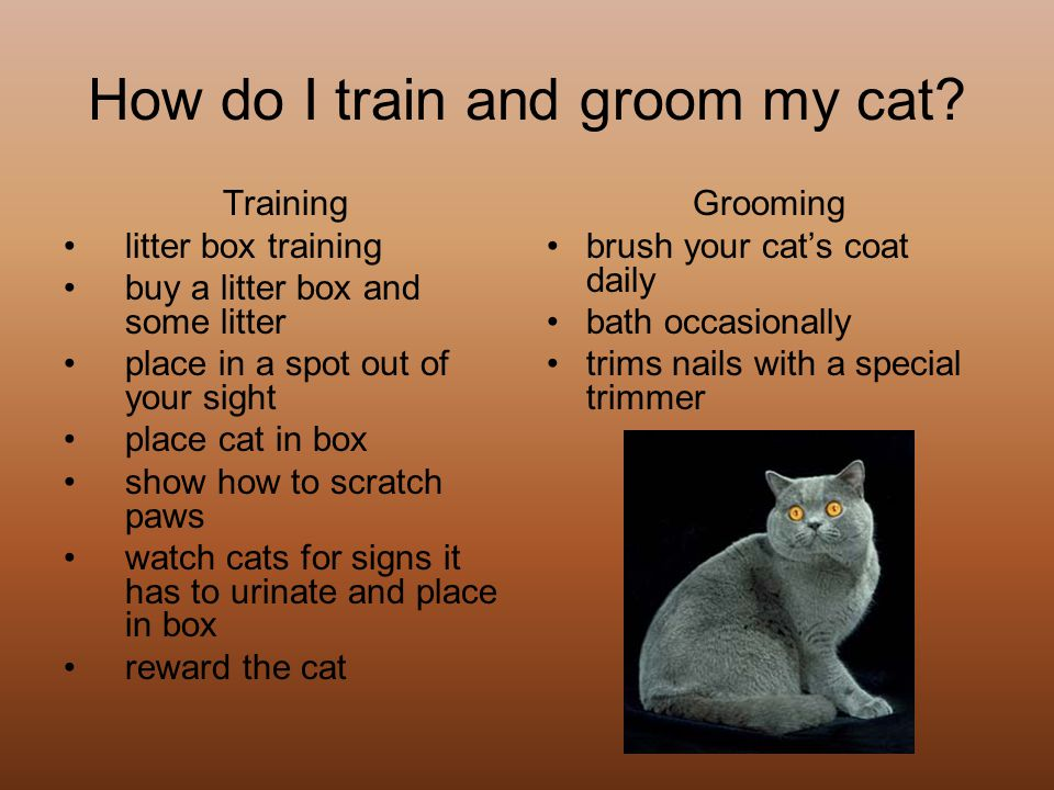 How do I train and groom my cat.
