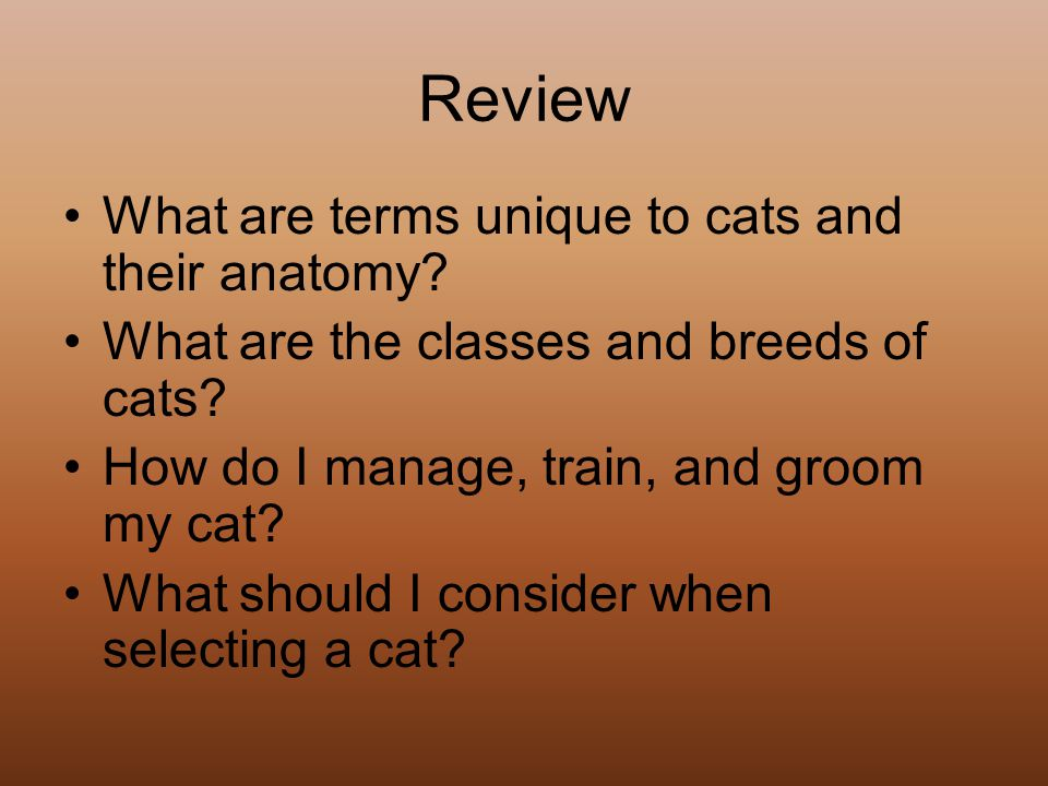 Review What are terms unique to cats and their anatomy.