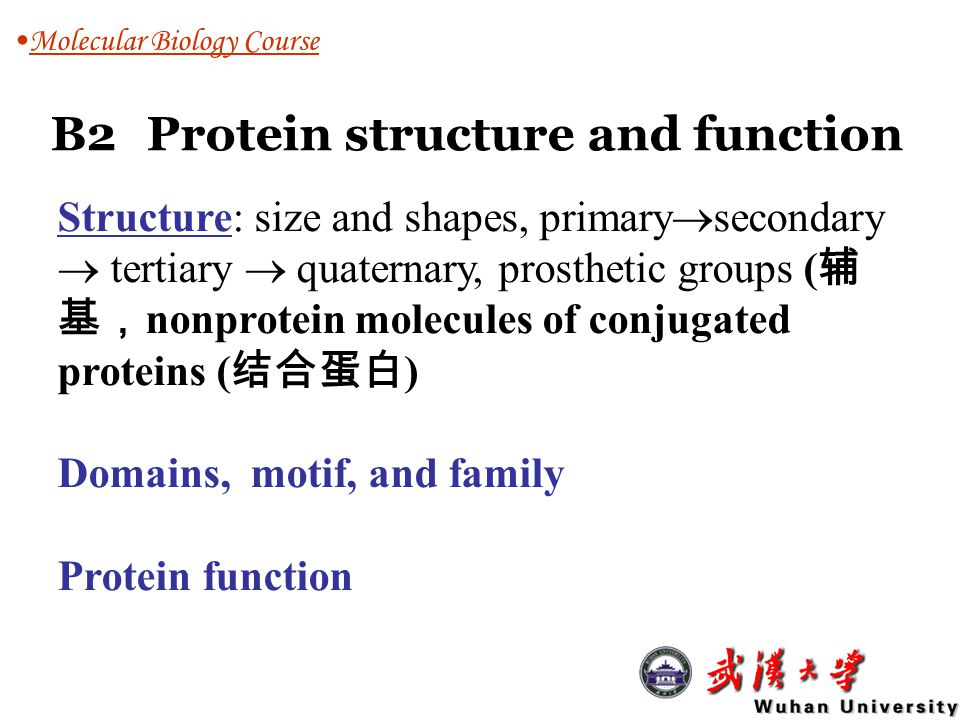 B2Protein structure and function Molecular Biology Course Structure: size and shapes, primary  secondary  tertiary  quaternary, prosthetic groups (