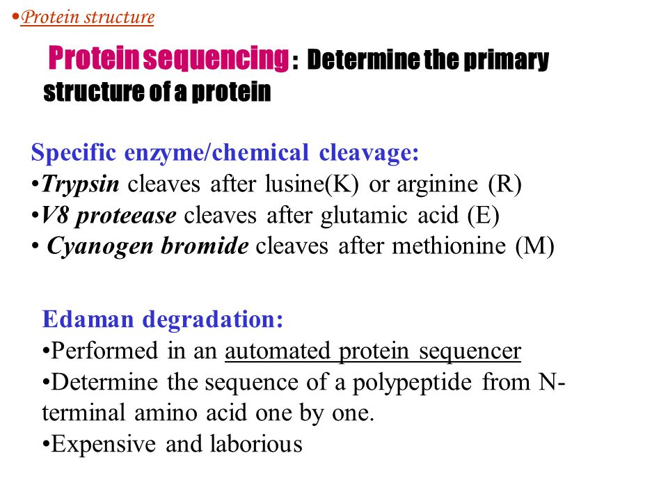 Protein sequencing : Determine the primary structure of a protein Specific enzyme/chemical cleavage: Trypsin cleaves after lusine(K) or arginine (R) V