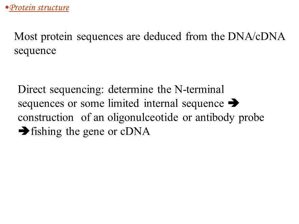 Most protein sequences are deduced from the DNA/cDNA sequence Direct sequencing: determine the N-terminal sequences or some limited internal sequence