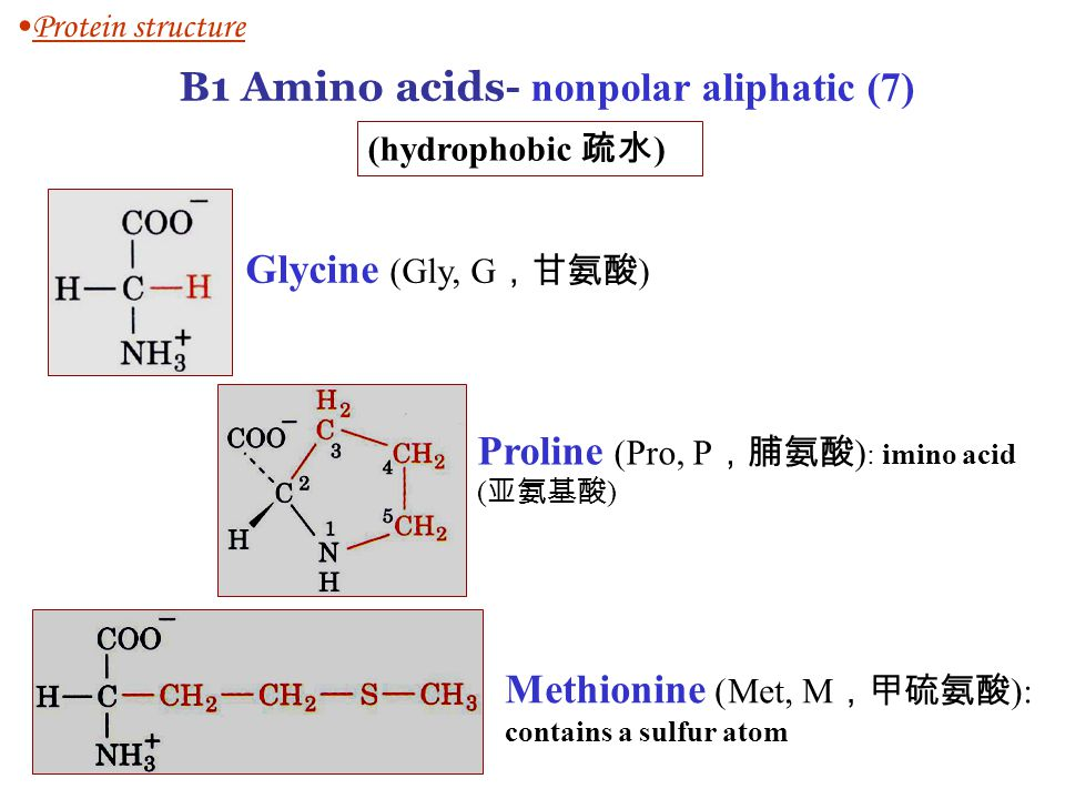 Glycine (Gly, G ,甘氨酸 ) Proline (Pro, P ,脯氨酸 ) : imino acid ( 亚氨基酸 ) Methionine (Met, M ,甲硫氨酸 ): contains a sulfur atom Protein structure B1 Amino acids- nonpolar aliphatic (7) (hydrophobic 疏水 )