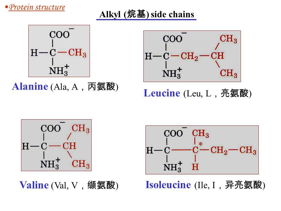 Alkyl ( 烷基 ) side chains Alanine (Ala, A ,丙氨酸 ) Valine (Val, V ,缬氨酸 ) Leucine (Leu, L ,亮氨酸 ) Isoleucine (Ile, I ,异亮氨酸 ) Protein structure