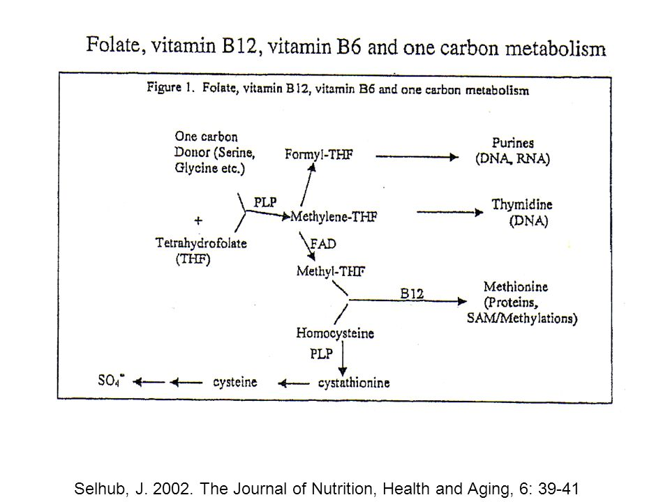 Selhub, J. 2002. The Journal of Nutrition, Health and Aging, 6: 39-41