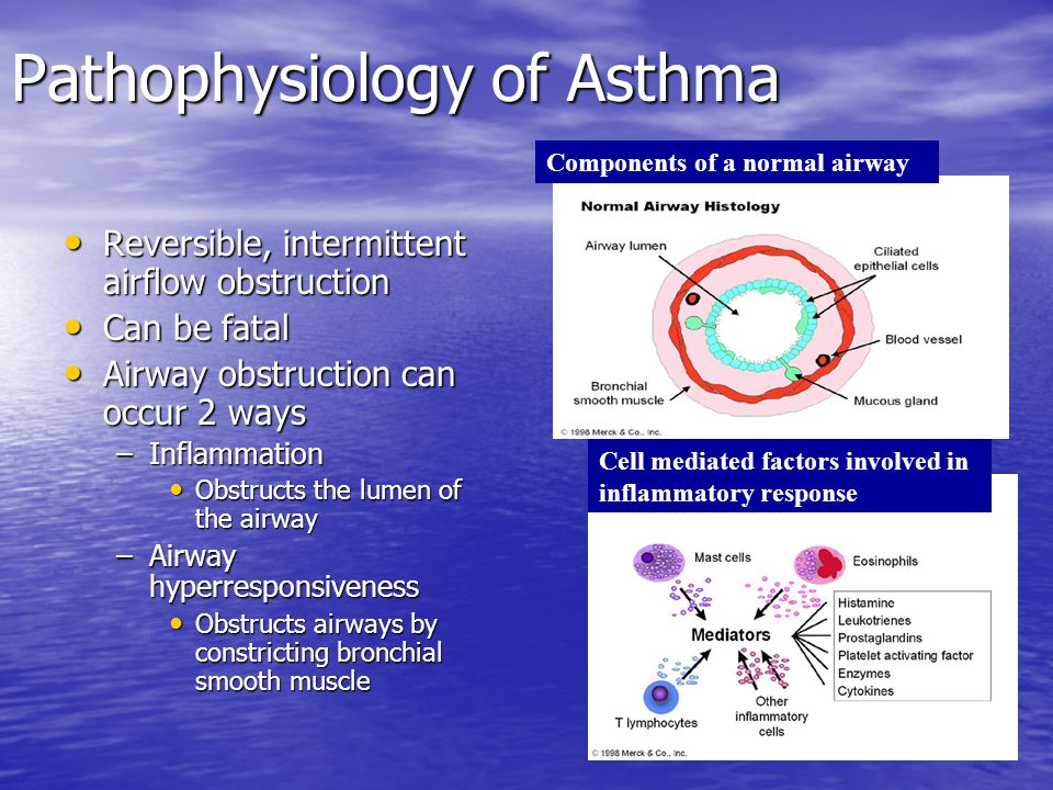 Pathophysiology of Asthma Reversible, intermittent airflow obstruction Reversible, intermittent airflow obstruction Can be fatal Can be fatal Airway o