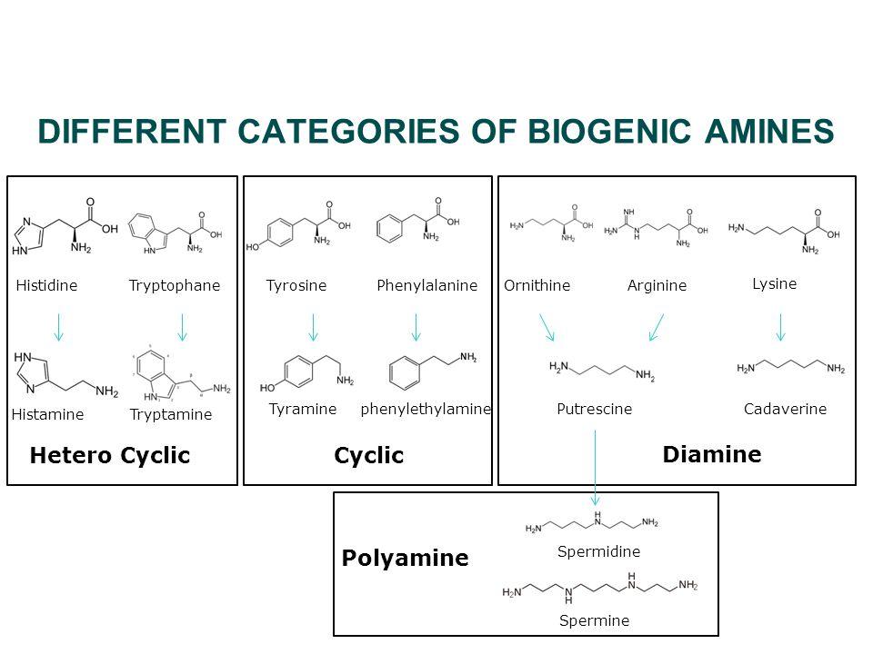 DIFFERENT CATEGORIES OF BIOGENIC AMINES HistamineTryptamine TryptophaneHistidine Hetero Cyclic Tyraminephenylethylamine PhenylalanineTyrosine Cyclic PutrescineCadaverine Lysine OrnithineArginine Diamine Spermine Spermidine Polyamine