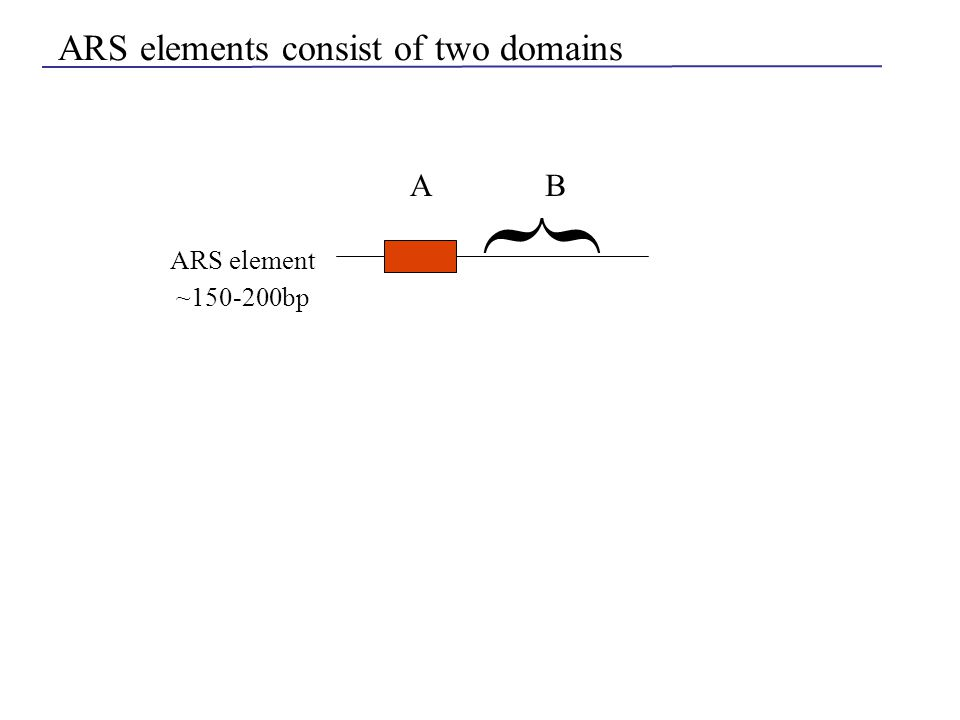 ARS elements consist of two domains A { B ARS element ~150-200bp