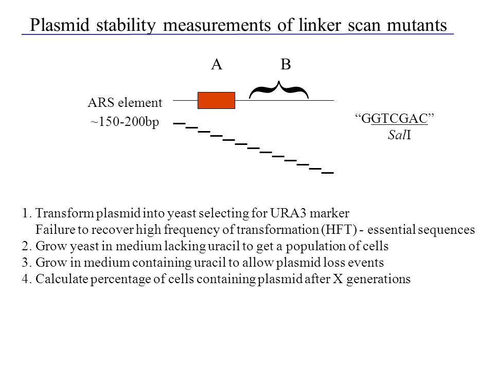 Plasmid stability measurements of linker scan mutants A { B ARS element ~150-200bp 1. Transform plasmid into yeast selecting for URA3 marker Failure t