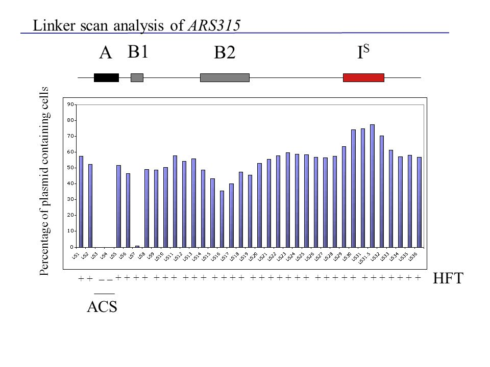 A B1 B2ISIS Linker scan analysis of ARS315 + + + + + + + + + + + + + + + + + + + + + + + + + + + + + + + + + _ + HFT ACS Percentage of plasmid contain