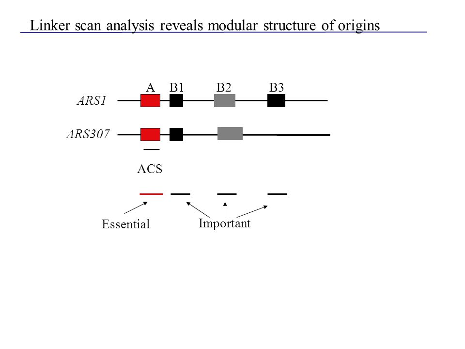 ARS1 AB1B2B3 Linker scan analysis reveals modular structure of origins ACS ARS307 Essential Important