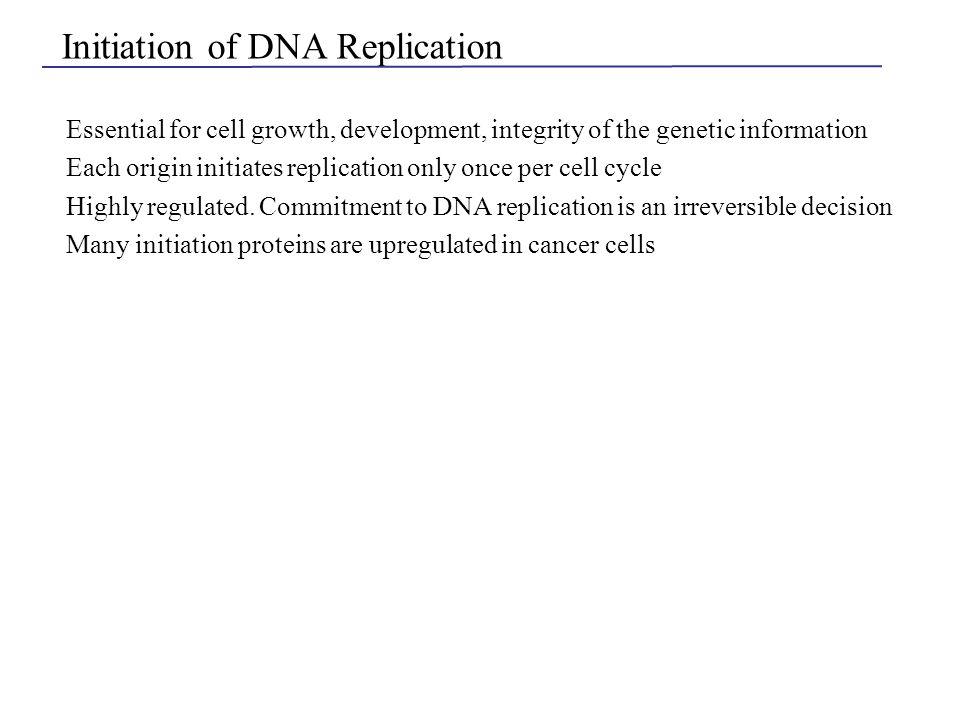 Telomerase synthesis at the ends of chromosomes Vega et al. (2003) Nat. Rev. MCB 4:948-959