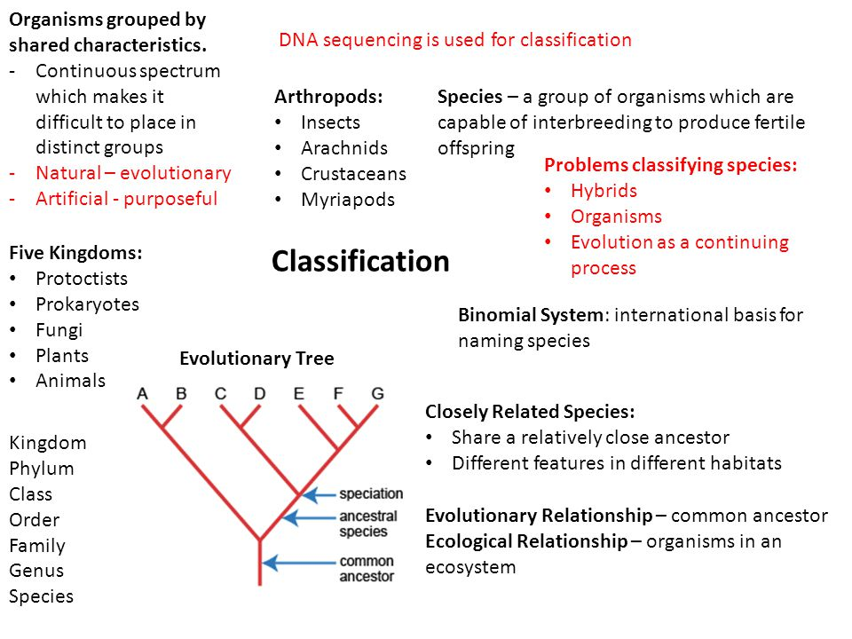Organisms grouped by shared characteristics.