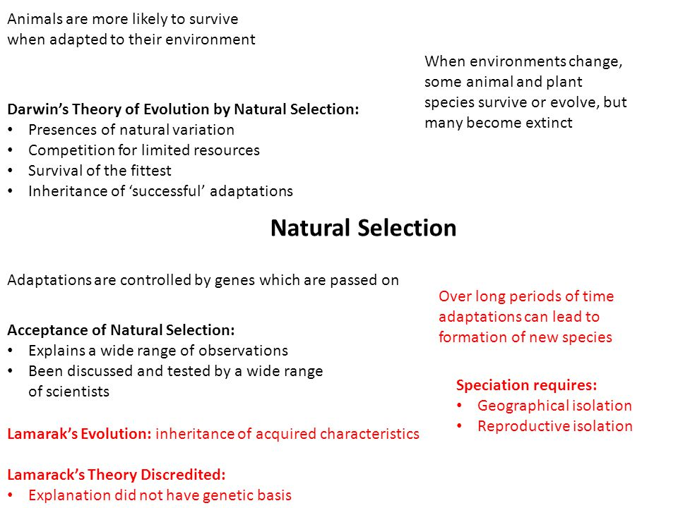 Natural Selection Darwin's Theory of Evolution by Natural Selection: Presences of natural variation Competition for limited resources Survival of the fittest Inheritance of 'successful' adaptations Adaptations are controlled by genes which are passed on Acceptance of Natural Selection: Explains a wide range of observations Been discussed and tested by a wide range of scientists Over long periods of time adaptations can lead to formation of new species Speciation requires: Geographical isolation Reproductive isolation Lamarak's Evolution: inheritance of acquired characteristics Lamarack's Theory Discredited: Explanation did not have genetic basis Animals are more likely to survive when adapted to their environment When environments change, some animal and plant species survive or evolve, but many become extinct