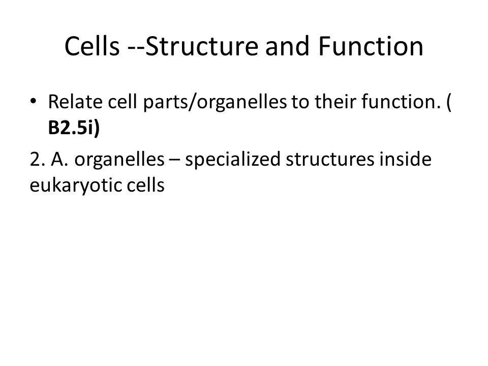 Cell Membrane 5.B.3.