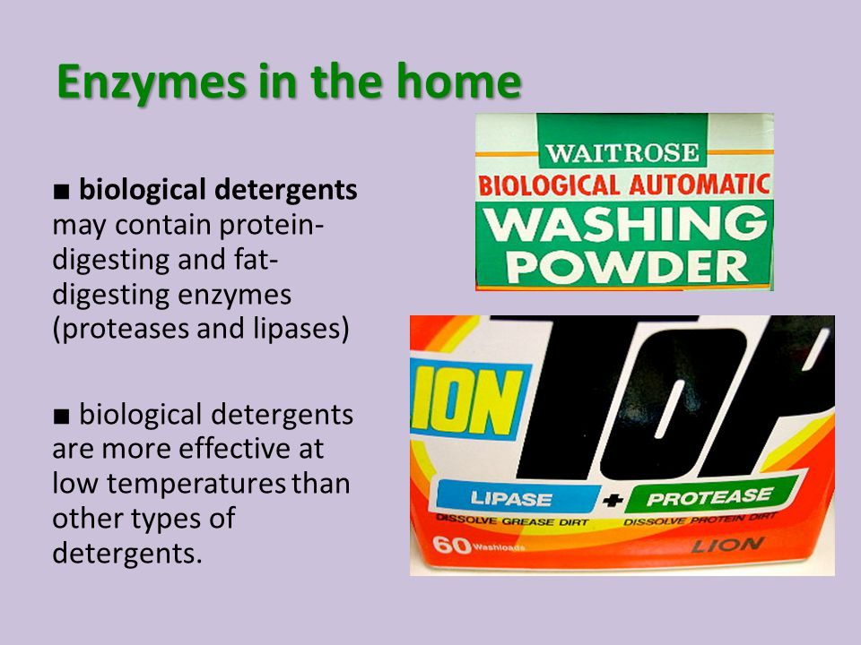 Enzymes in the home ■ biological detergents may contain protein- digesting and fat- digesting enzymes (proteases and lipases) ■ biological detergents