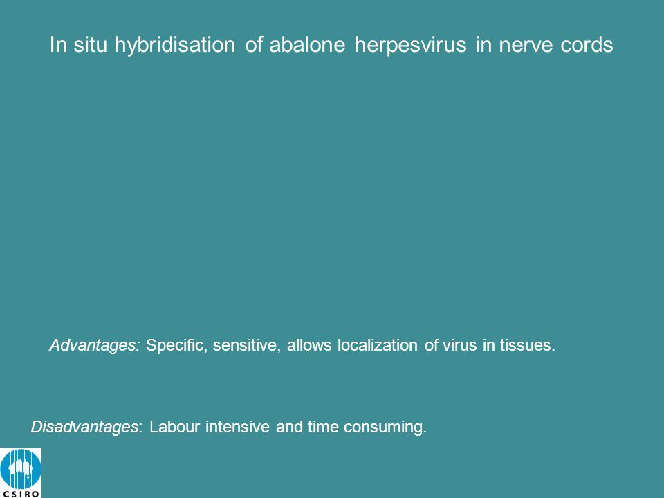 In situ hybridisation of abalone herpesvirus in nerve cords Disadvantages: Labour intensive and time consuming.