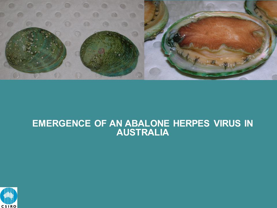 EMERGENCE OF AN ABALONE HERPES VIRUS IN AUSTRALIA