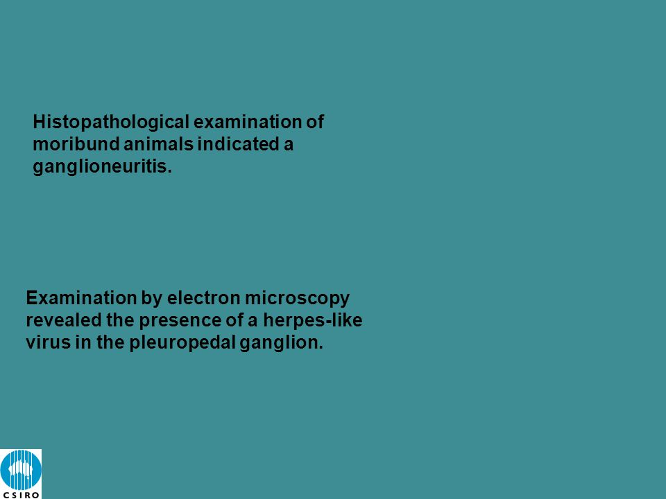 Histopathological examination of moribund animals indicated a ganglioneuritis.