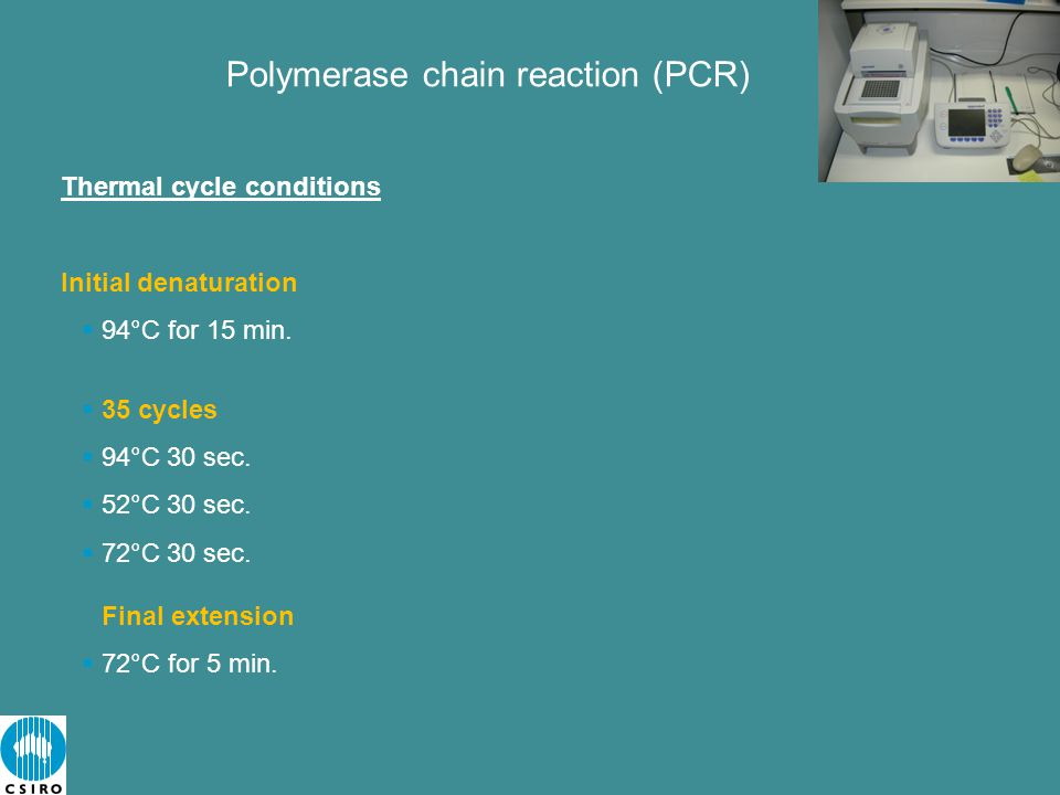 Polymerase chain reaction (PCR) Thermal cycle conditions Initial denaturation  94°C for 15 min.
