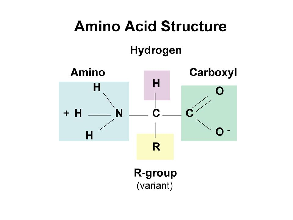 Properties of 2-amino acids (B.2.2) Zwitterion (dipolar) – amino acids contain both acidic and basic groups in the same molecule therefore, are amphoteric (capable of behaving as acids or bases) in nature – amines can accept a proton – carboxylic acids can donate a proton