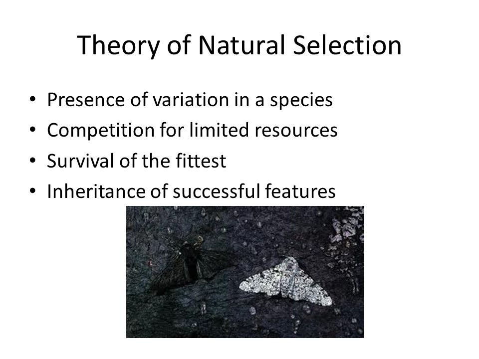 Theory of Natural Selection Presence of variation in a species Competition for limited resources Survival of the fittest Inheritance of successful features