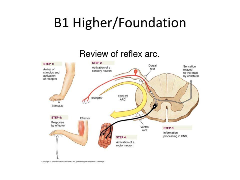 B1 Higher/Foundation