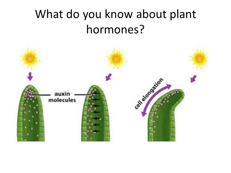 What do you know about plant hormones