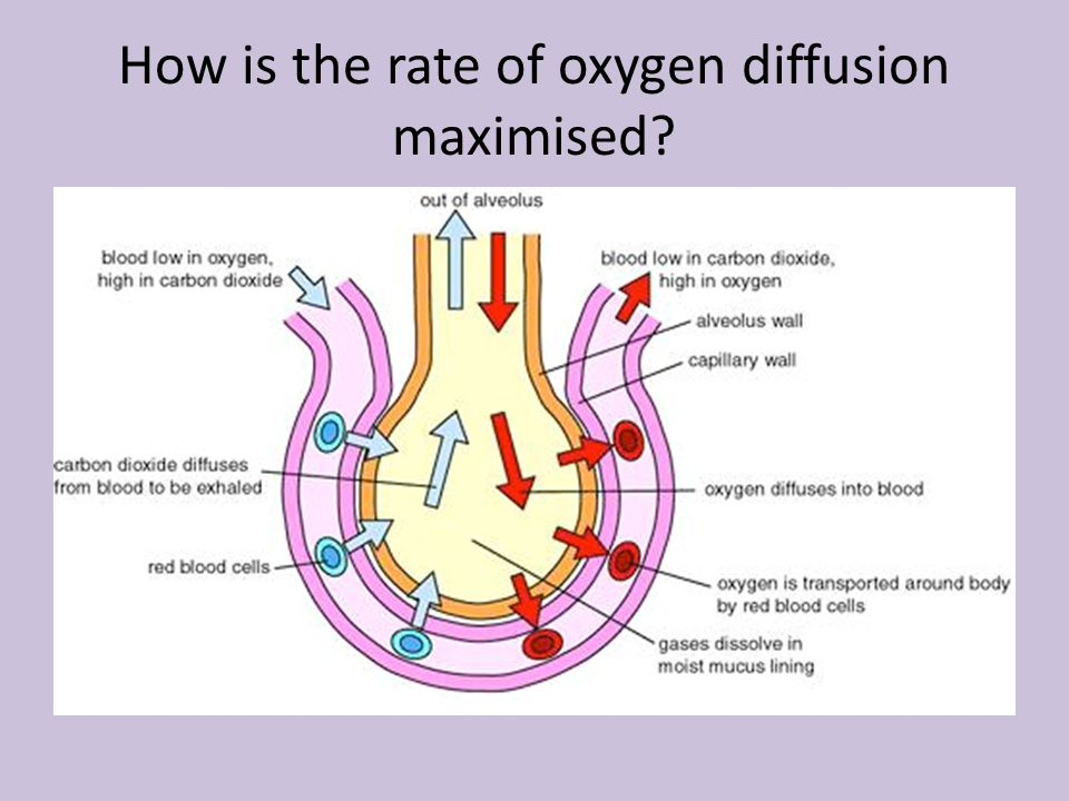 How is the rate of oxygen diffusion maximised?