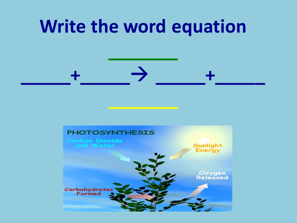 Write the word equation _______ _____+_____  _____+_____ _______