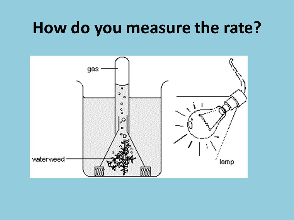 How do you measure the rate?