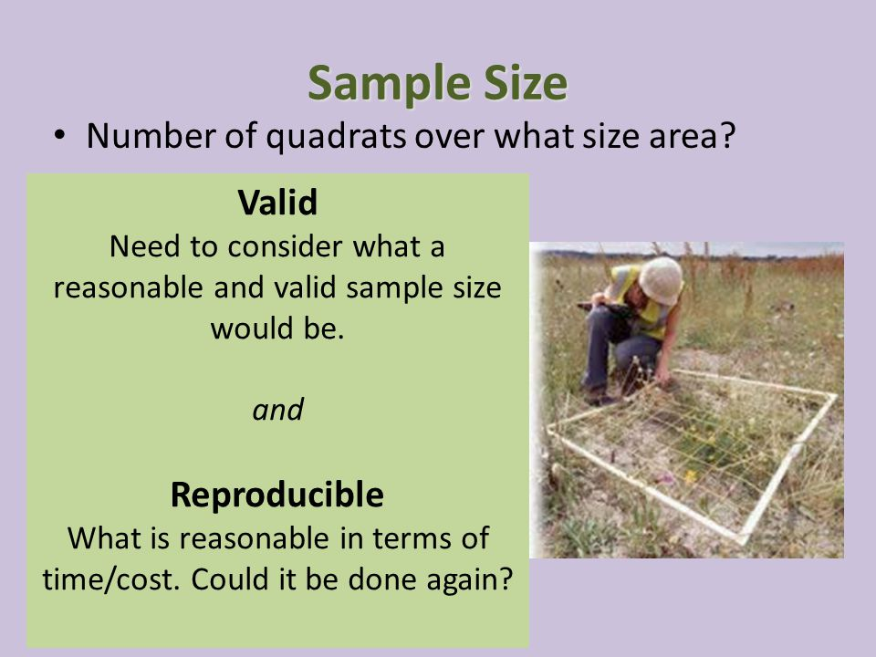 Sample Size Number of quadrats over what size area.