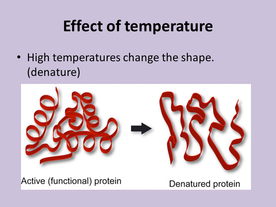 Effect of temperature High temperatures change the shape. (denature)