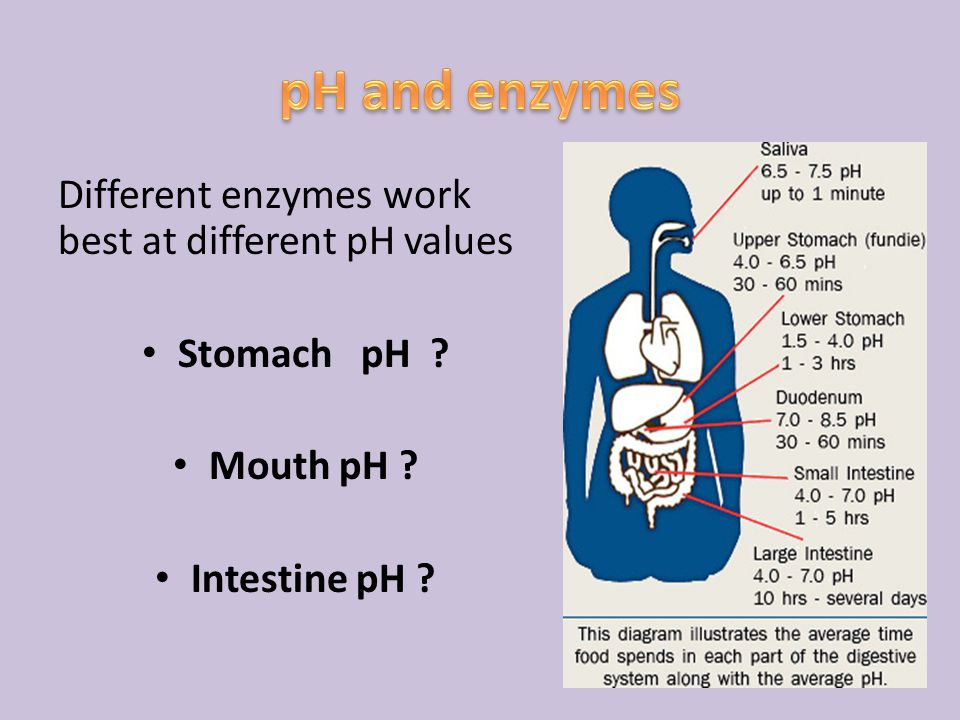 Different enzymes work best at different pH values Stomach pH ? Mouth pH ? Intestine pH ?
